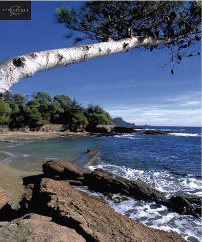 A vendre résidence de tourisme de prestige classée 3 étoiles en Loueur en meublé non professionnel. Saint-Raphaël, située à équidistance de Cannes et de Saint-Tropez, est implantée au pied du massif de lEstérel et de sa forêt domaniale. Station balné...
